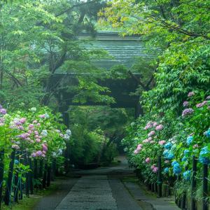 【ご報告】東京カメラ部インスタライブに出演します。