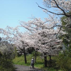 桜の花に癒されて。。。。。。。