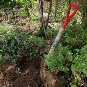 土の感触で心は癒されます。My舞Garden2020