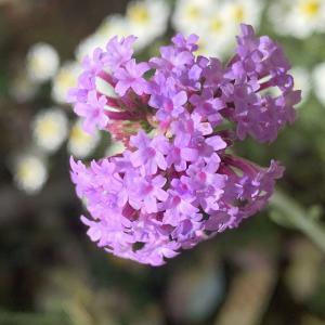 花の開花で知る温暖化
