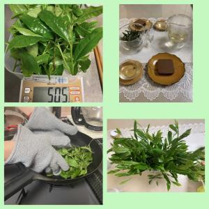 """""""釜炒り緑茶""""を作りました。"""