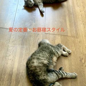 猫の姿で夏を知る