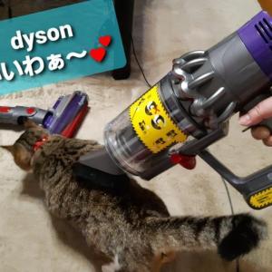 ダイソン大好き猫
