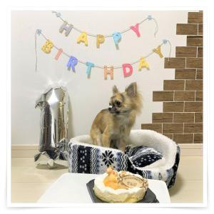 2★お便り♪チワワ「さんじ君」1歳のお誕生日♡