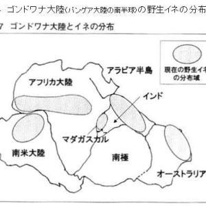 「縄文ノート55 マザーイネのルーツはパンゲア大陸」の紹介