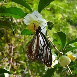 アサギマダラ蝶の来る図書館