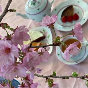 桜のティータイム