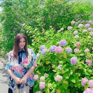 紫陽花柄で、紫陽花寺へ