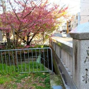 母と京都旅・晴明神社