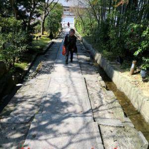 母と京都旅・高台寺から花咲萬次郎ランチ