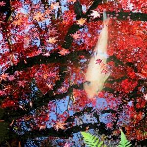 秋の京都一人旅/永観堂