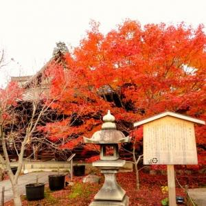 秋の京都一人旅・勝林寺