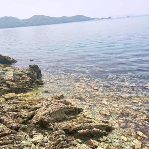 地元:八幡浜の海にて生態調査
