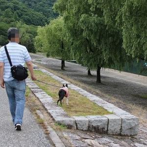 湖畔をお散歩。