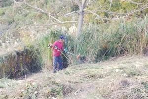 茶草場の草刈り