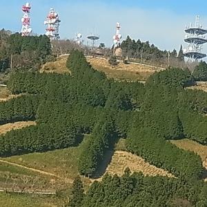 東山地区民による茶文字の草刈り
