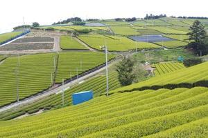 東山大茶園、県景観最優秀賞を受賞