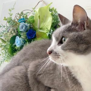 癒し癒され猫との時間