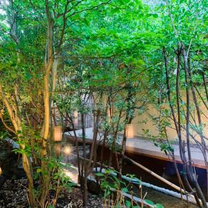 源泉かけ流し温泉と鮑の踊り焼@ホテル紫苑