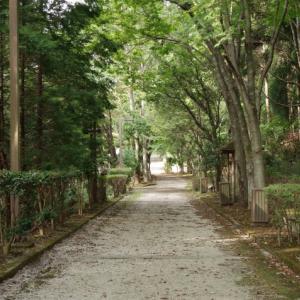 秋の山歩き(5)-亀岡・和らぎの道