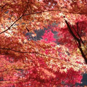 秋の山歩き(7)-武田尾・桜の園