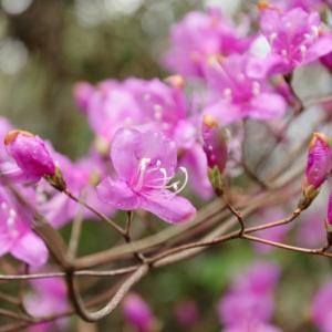 春の山歩き(3)-高ヶ尾山(林道萩谷岡山線)