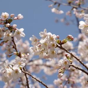 春の山歩き(4)-飯道山・庚申山