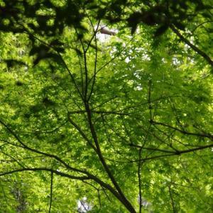 春の山歩き(8)-教学の森・六箇山