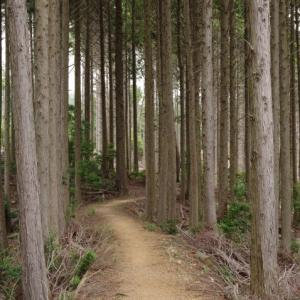 初夏の山歩き(1)-ようらく台園地から箕面山