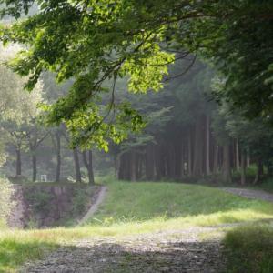 夏の山歩き(1)-綿向山