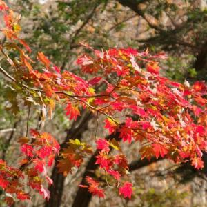 秋の山歩き(3)-竜ヶ岳・愛宕山