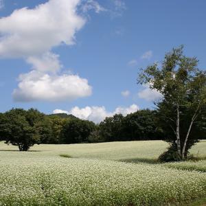 南会津町 高杖原のそば畑 後半