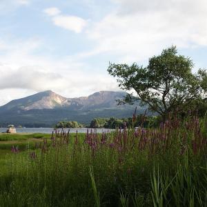 北塩原村 桧原湖のエゾミソハギ 前半
