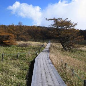 思い出の撮影行 池の平湿原 後半