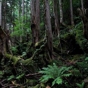 茅野市 蓼科・苔と原生林の世界 その2