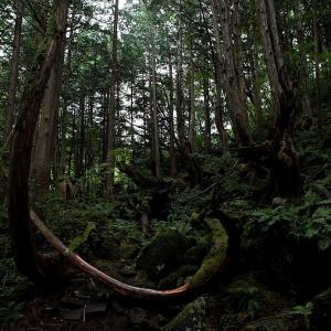 茅野市 蓼科・苔と原生林の世界 ラスト