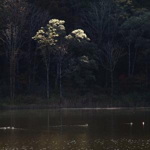 糸魚川市 蓮華白池の紅葉 その3