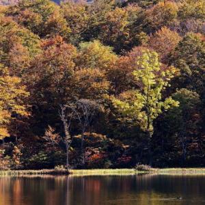 糸魚川市 蓮華白池の紅葉 その4