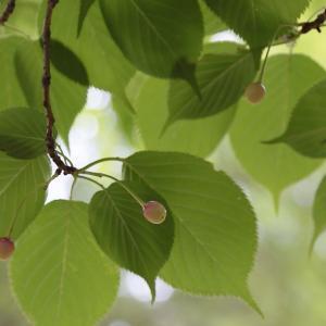 グリーンシーズン到来 武蔵野の森公園 1