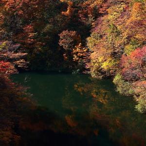 過去写真から 奥三面ダムの紅葉