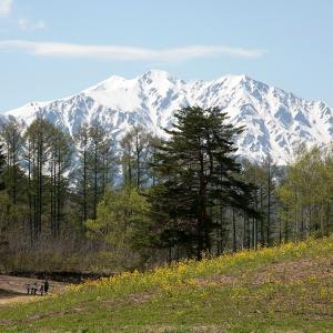 過去写真から 信州桜巡り 中山高原の菜の花