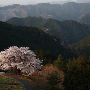 過去写真から 飯能市 八徳の一本桜