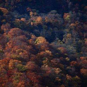 過去写真から 福島 観音沼の紅葉 おまけ