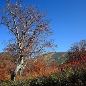 過去写真から 山形県・西川町 月山の紅葉 麓周辺