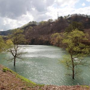 西和賀町 湯本 焼地台の新緑