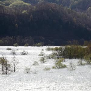 西和賀町 錦秋湖に沈む新緑 その1