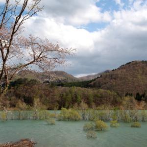 西和賀町 錦秋湖に沈む新緑 その2