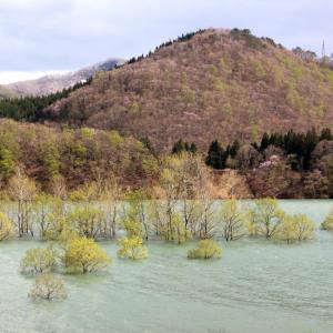 西和賀町 錦秋湖に沈む新緑 その3