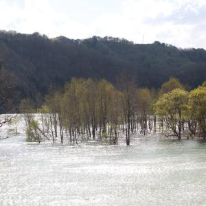 西和賀町 錦秋湖に沈む新緑 ラスト