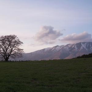 雫石町 小岩井農場の一本桜